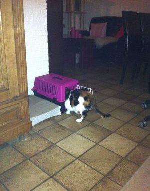 1-dag-project-kattenmandje-dag-1-kattenherplaatsing-gelderlander