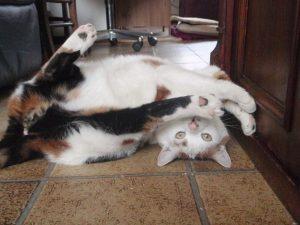 chloe-even-voorstellen-marieke-van-de-weijer-kattenherplaatsing