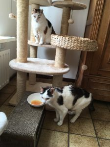 2018-kattensoep-miamor-pil-kattenherplaatsing-voorlichting-pil2