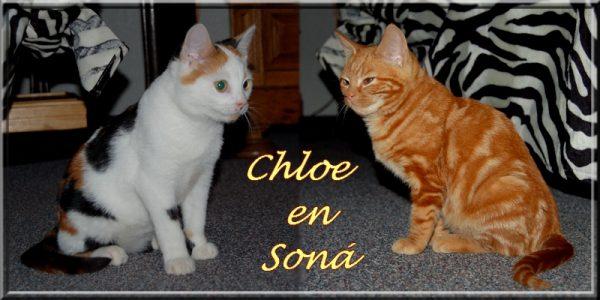 Chloe-en-Sona-gelderlander-kattenherplaatsing