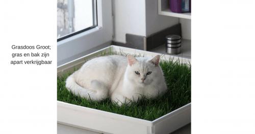 Grasdoos-groot-met-kat-productpagina-kattenherplaatsing
