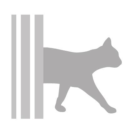 info-kattenherplaatsing-kattenvoorlichting-kattengedrag-kattenvoeding-kat-kitten-kittens-adopteren