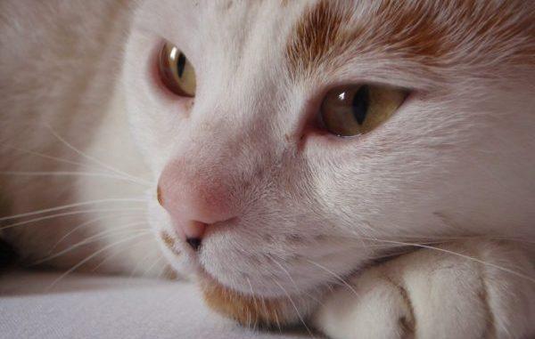 chloe-o-brian-geboren-augustus-2007-gastblog-tips-stress-traumeel-rouwproces