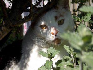 chloe-tuin-kat-poes-kattenherplaatsing-voorlichting-fotograaf-nienke-flipsen