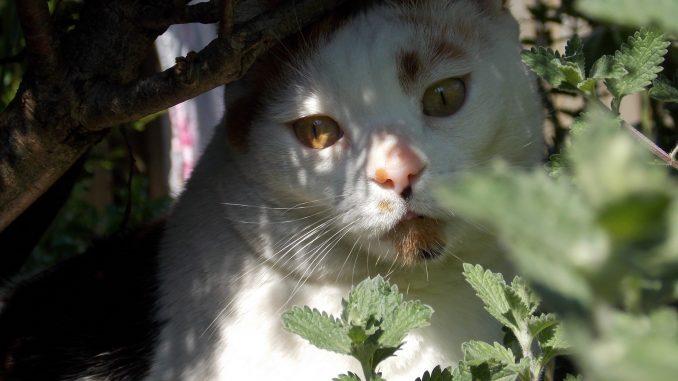 chloe-tuin-kat-poes-kattenherplaatsing-voorlichting-fotograaf-nienke-flipsen-10-veelgestelde-vragen
