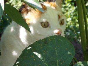 fotograaf-nienke-flipsen-chloe-tuin-kat-poes-kattenherplaatsing-voorlichting