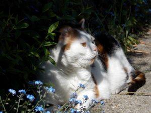 chloe-tuin-kat-poes-kattenherplaatsing-voorlichting-fotograaf-nienke-flipsen-kattenweetjes-en-kattenfeiten
