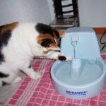 fontein-kat-meer-drinken-kattenherplaatsing-voorlichting (2)