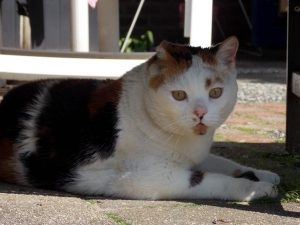 geen-ijs-warm-weer-kat-kattenherplaatsing-voorlichting2