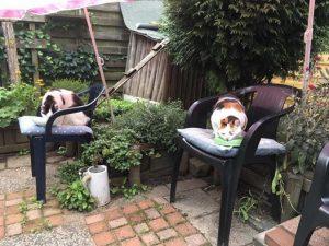 help-kat-op-dieet-apart-voeren-hoe-dieetvoer-kattenherplaatsing