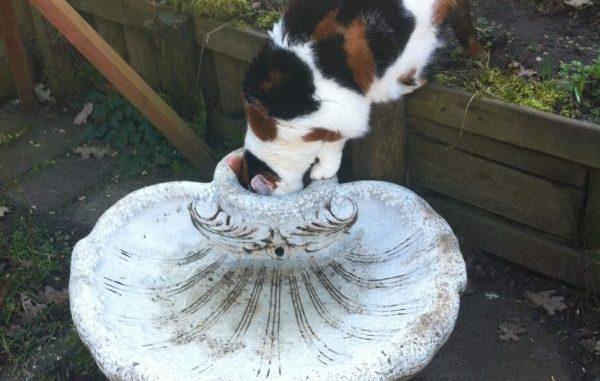 hoe-laat-ik-kat-meer-drinken-kattenherplaatsing-voorlichting-katten