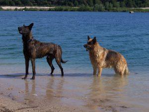honden-even-voorstellen-marieke-van-de-weijer-kattenherplaatsing
