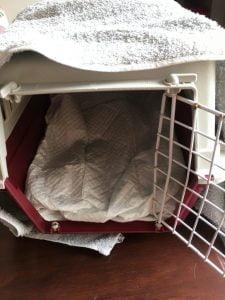 incontintentiematjes-puppy-kat-reismand-kattenherplaatsing-voorlichting1