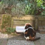 kat-meer-drinken-waterschaal-kattenherplaatsing-tips-oudere-kat-voerbakverhoger