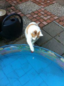 katten-en-warmte-kattenherplaatsing-voorlichting2