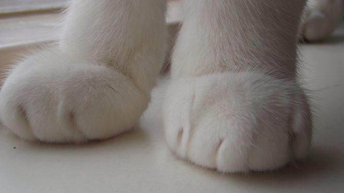 kattenpootjes-voetjes-kattenpootje-kattenherplaatsing-fotograaf-nienke-flipsen