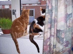 kittens-buiten-kijken-kattenherplaatsing-gras-kattengras-het-gaat-mis-met-de-nieuwe-kat