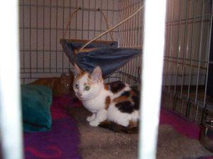marieke-van-de-weijer-gelderlander-kattenherplaatsing