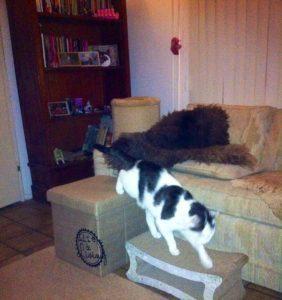 oudere-kat-artrose-opstapje-tonick-kartonnen-krabmeubel-krabplankje-kattenherplaatsing