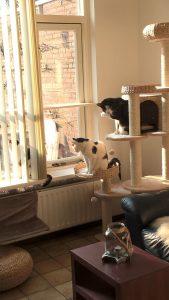 poezen-katten-krabpaal-verrijking-kattenherplaatsing (1)