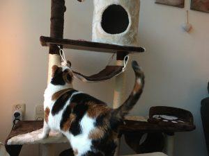 poezen-katten-krabpaal-verrijking-kattenherplaatsing-help-verhuizen