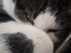 rouwproces-kat-kattenherplaatsing-voorlichting-jinn
