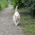rouwproces-kat-kattenherplaatsing-voorlichting-thomas