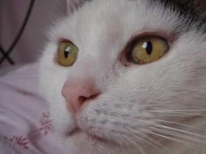 rouwproces-kat-kattenherplaatsing-voorlichting-tonick