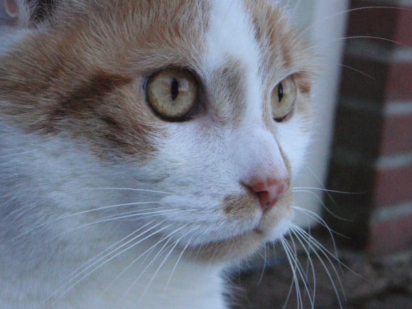 rouwproces-kat-kattenherplaatsing-voorlichting