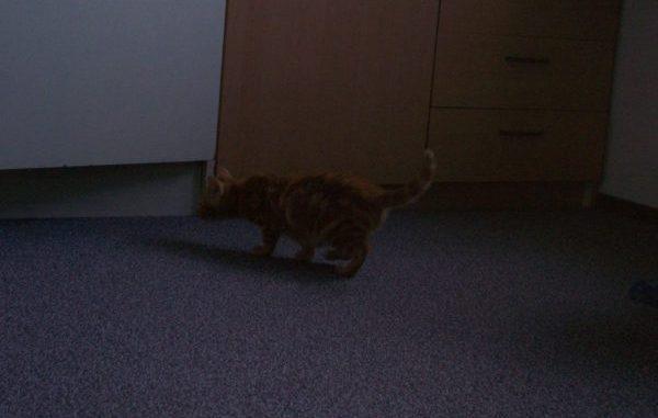 rubia-3e-kitten-marieke-van-de-weijer-gelderlander-kattenherplaatsing
