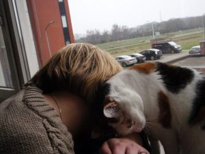 smeren-vegen-knuffelen-chloe-marieke-kattenherplaatsing