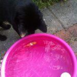 sneep-met-robovisjes2-katten-en-warmte-kattenherplaatsing-voorlichting