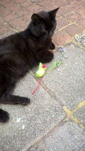 spitsmuizen-kattenherplaatsing-foto-kat-speelgoedmuis