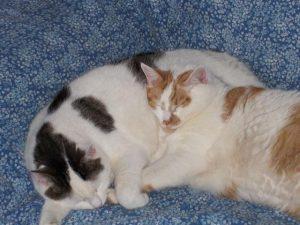 thomas-tonick-samen-slapen-kattenherplaatsing-vriendjes-katten (2)
