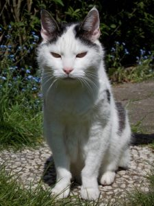 tonick-fotograaf-nienke-flipsen-laat-die-oude-kat-toch-inslapen-voorlichting-ijs-warm-oude-kat