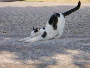 tonick-uitrekken-stretchen-kattenweetjes-kattenfeiten-soepel-artrose-traumeel