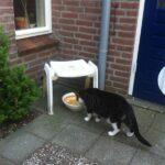 waterplaats-buiten-drinken-katten-en-warmte-kattenherplaatsing-voorlichting-tips-oudere-kat-voerbakverhoger