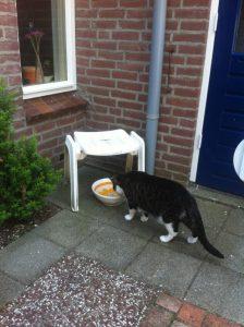 waterplaats-buiten-drinken-katten-en-warmte-kattenherplaatsing-voorlichting