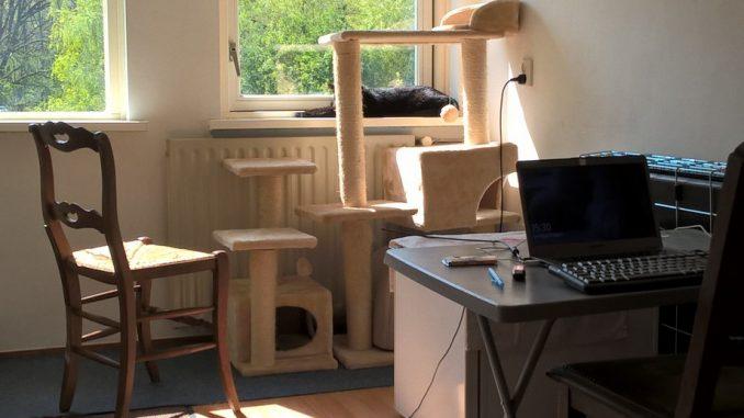 help-we-gaan-verhuizen-kat-kattenkamer-apart-kattenherplaatsing