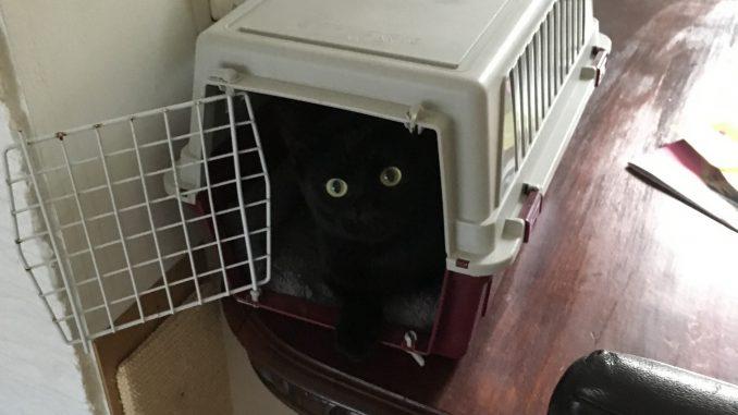help-we-gaan-verhuizen-kat-reismand-kattenherplaatsing