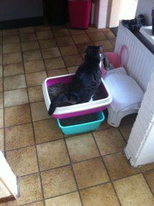 kat-kattenbak-kattenherplaatsing-voorlichting-help-verhuizen