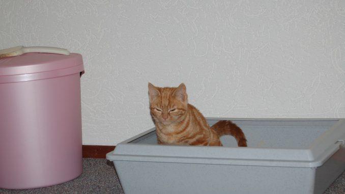 kat-kattenbak-kattenherplaatsing-voorlichting-kitten-sona