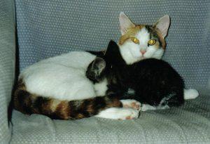 moeder-kitten-gizmo-jinn-kattenherplaatsing-kattenweetjes-en-kattenfeiten