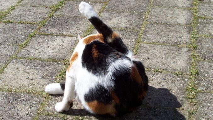 poes-billen-kont-wassen-vies-kattenvoorlichting (2)