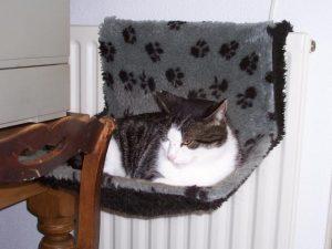 poes-kat-slapen-kattenherplaatsing-kattenweetjes-en-kattenfeiten