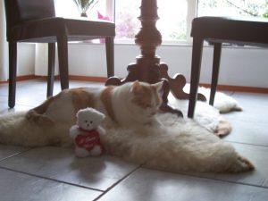 poes-kat-slapen-kattenherplaatsing-help-verhuizen-kattenvoorlichting