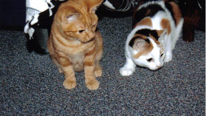sona-poes-rood-rood-kattenherplaatsing (4)