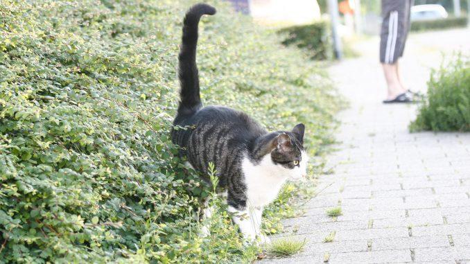sproeien-kat-buiten-struik-kattenherplaatsing-voorlichting