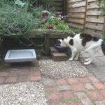 tips-oudere-kat-voerbakverhoger-verhoger-kattenherplaatsing (1)