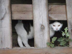 tonick-schutting-hout-kattenherplaatsing-fotograaf-nienke-flipsen-katten-houden-niet-van-veranderingen